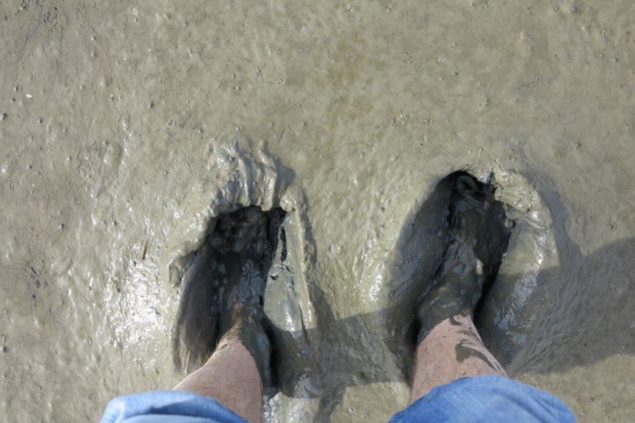 Wattenmeer hautnah